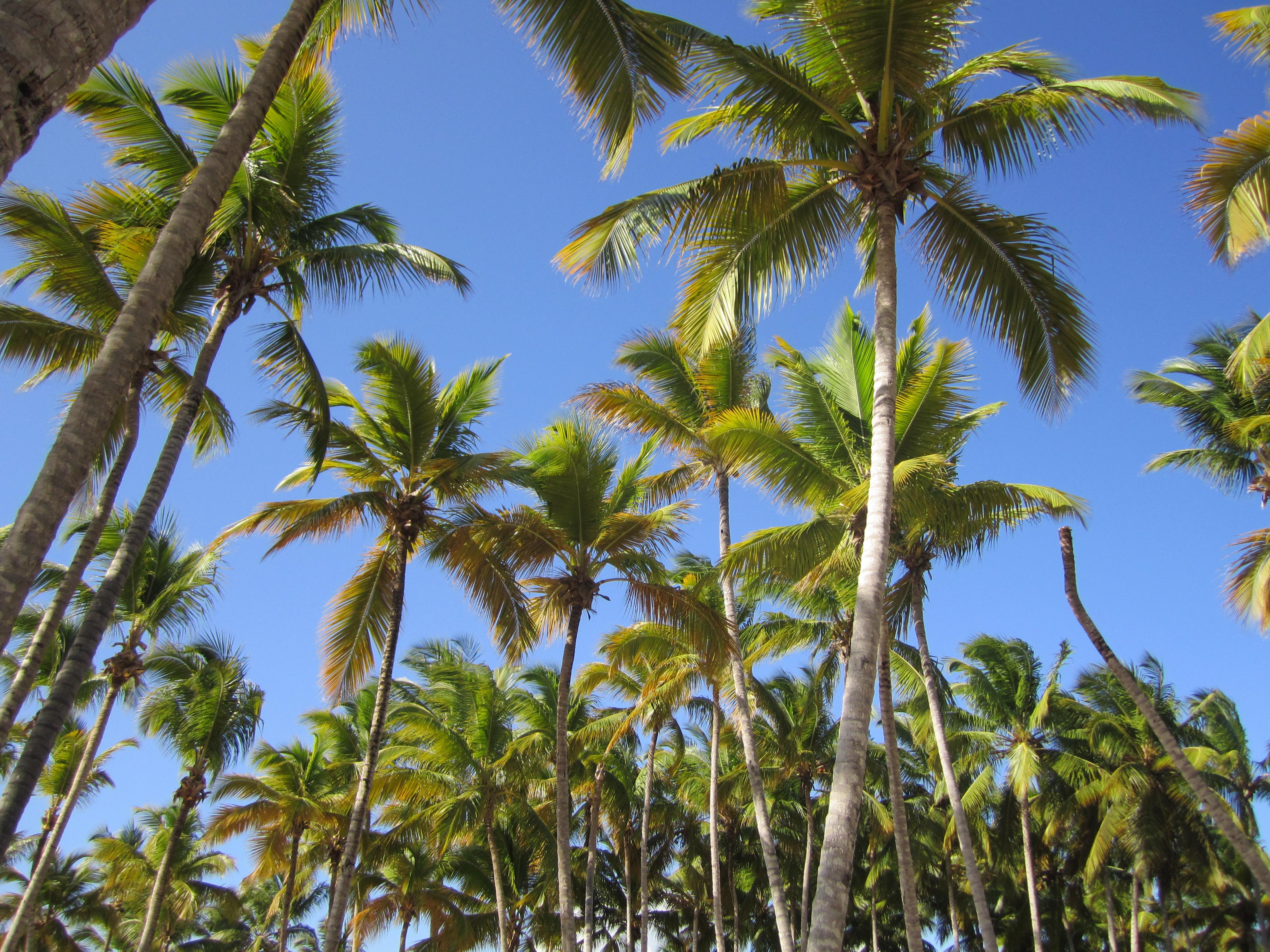 trees palm blue - photo #2